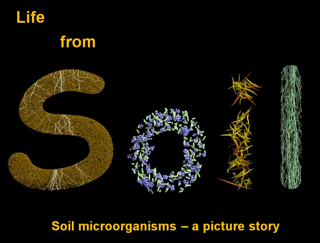 soil vs microbiology Microbiology is the study of microbes and their interactions with humans, animals, plants, and the environment, such as bacteria.