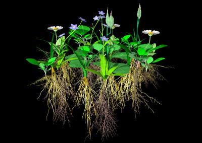 Meadow plant community
