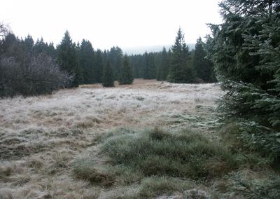 Meadows in the Harz (Schierke)