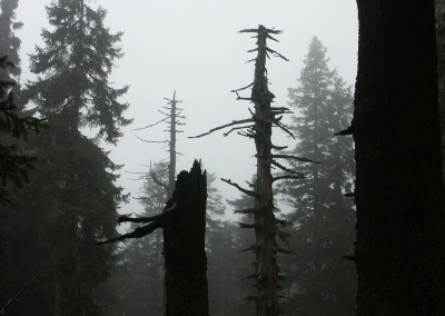 Dark forest (Brocken mountain)