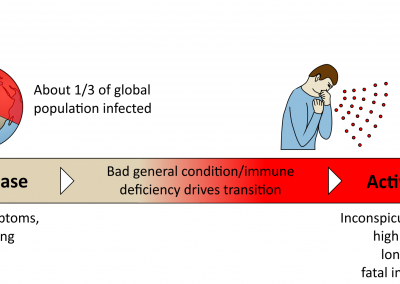 Tuberculosis: course of disease