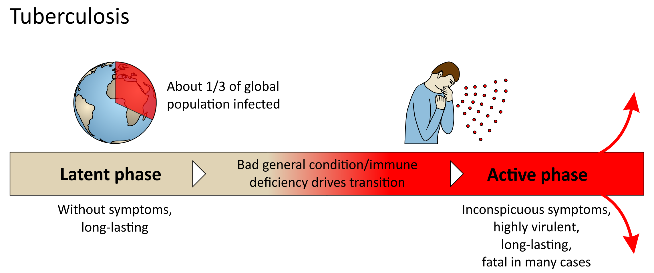 Tuberculosis - course of disease
