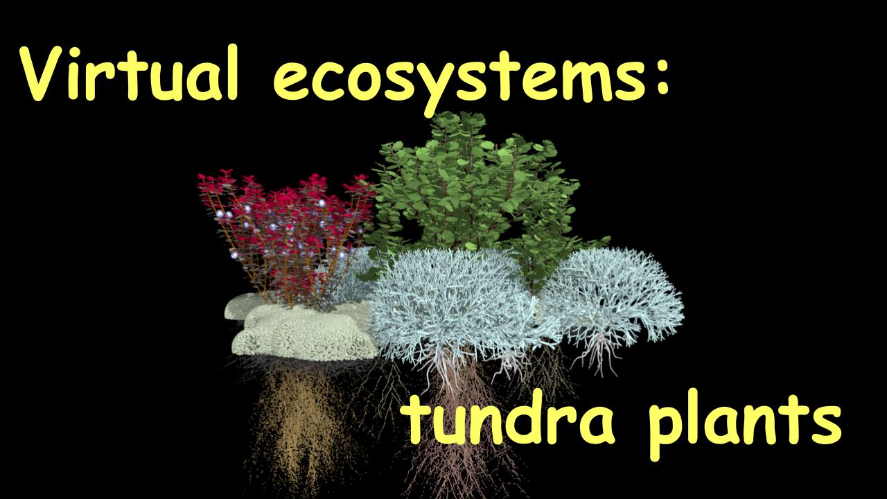 Virtual ecosystems: tundra plants