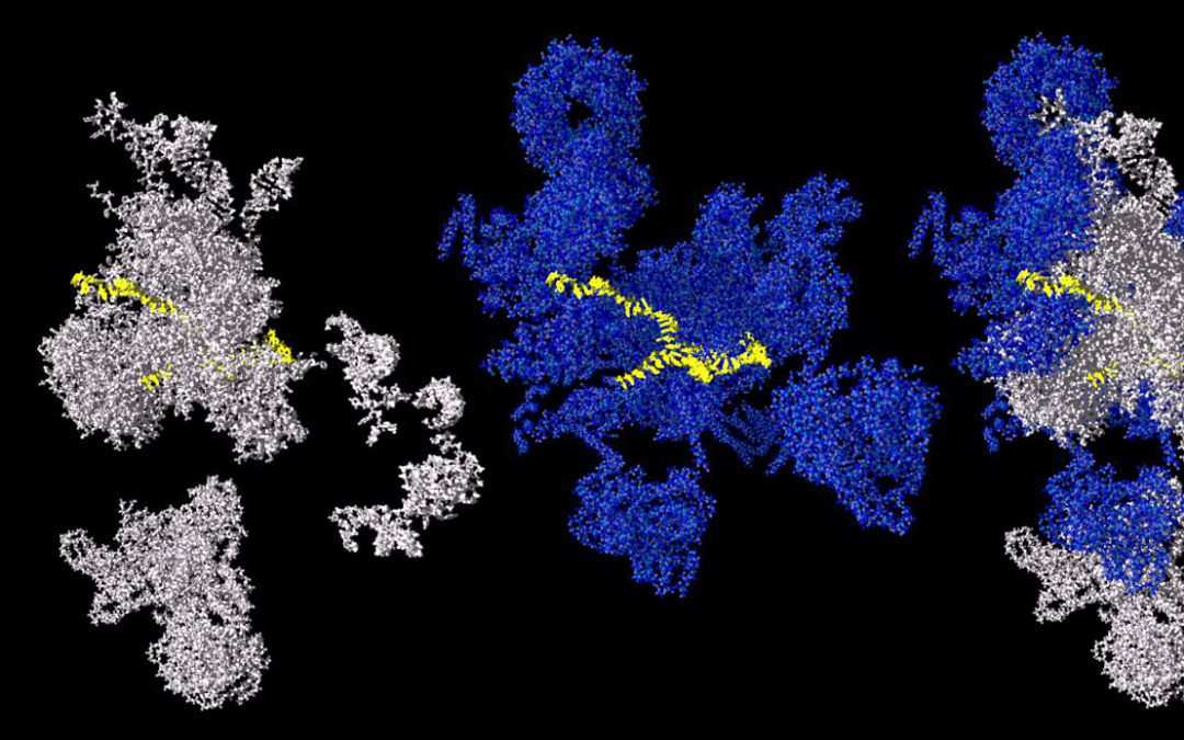 The Spliceosome – new insights into complex molecular machineries