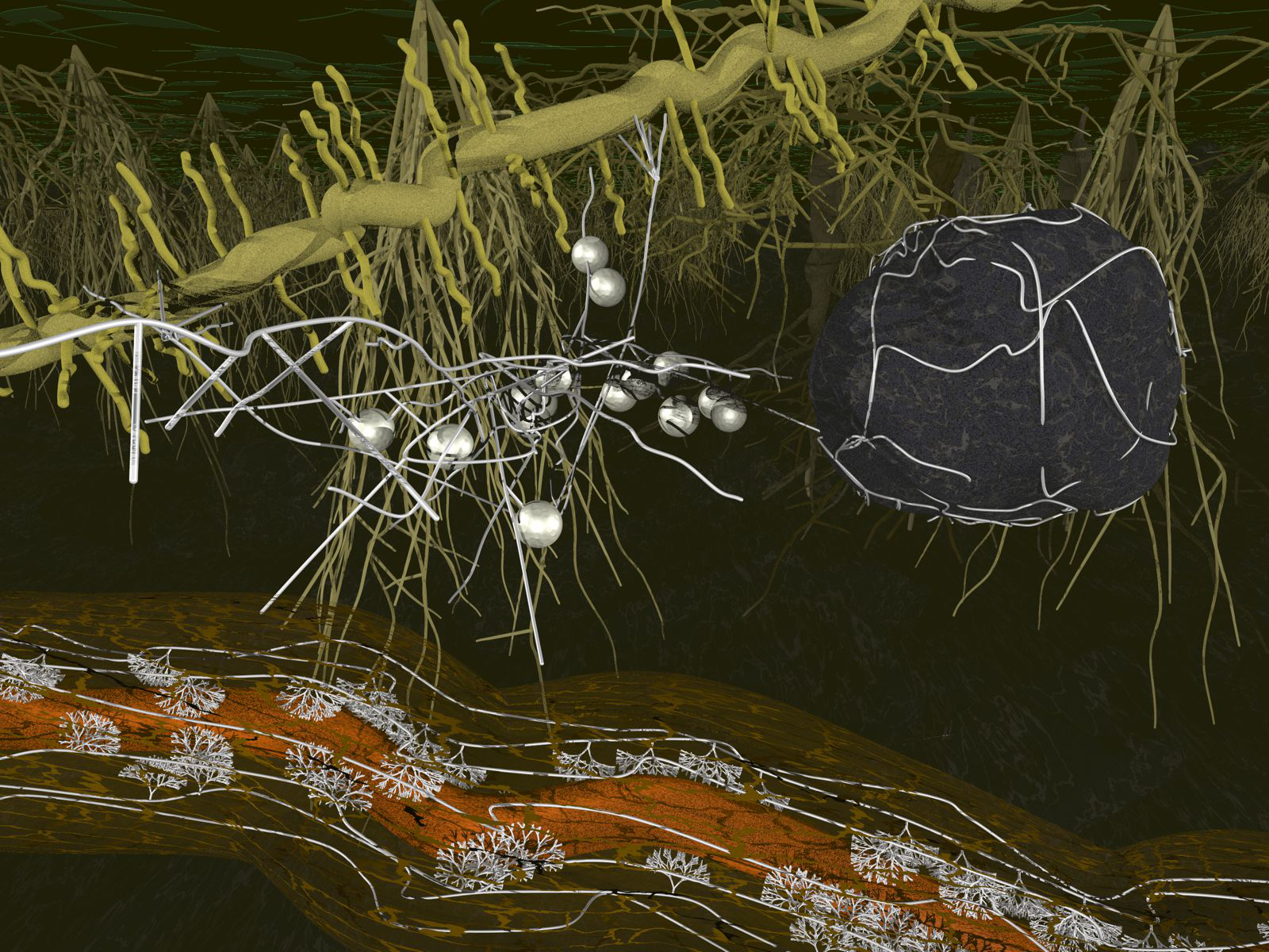 Arbuscular mycorrhiza – ancient belowground connections