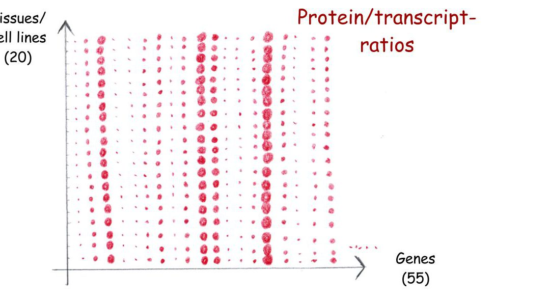 Gene-specific correlation of RNA and protein levels in human cells and tissues