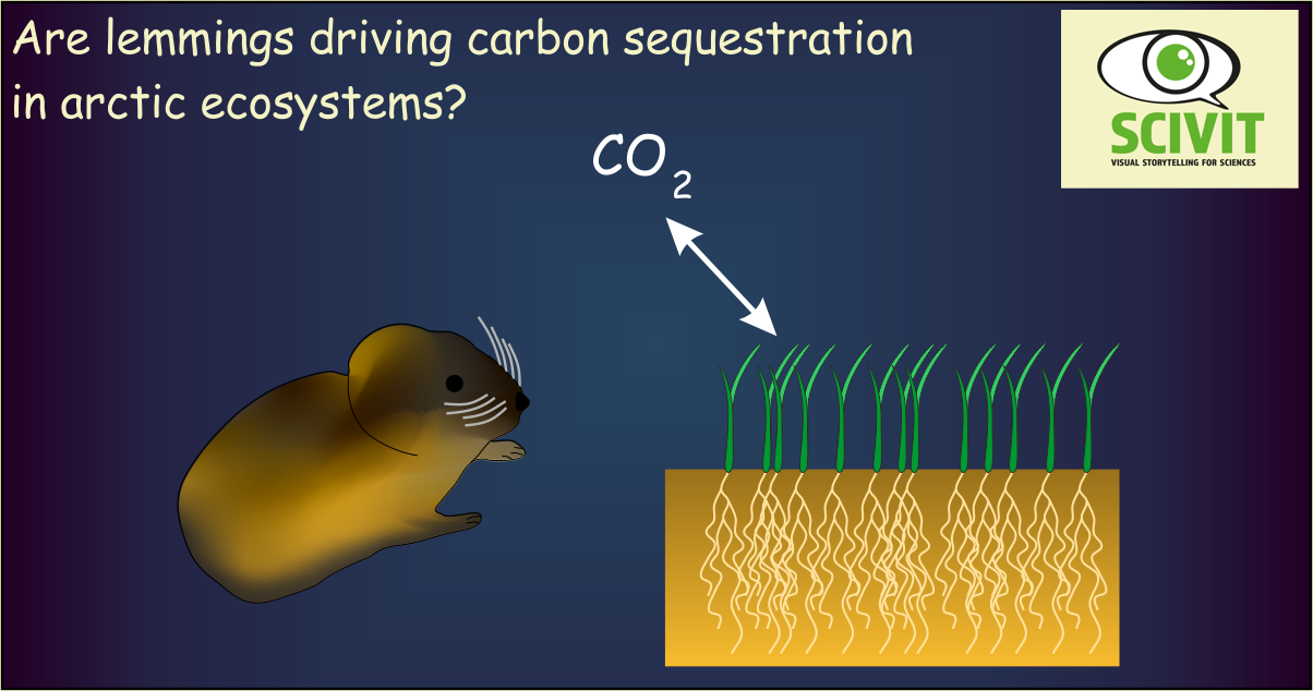 Are lemmings driving carbon sequestration in arctic ecosystems?