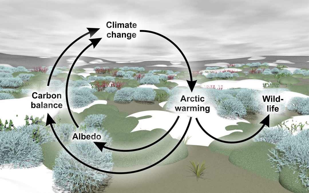Scivit Newsletter: The tundra biome – a hotspot of climate change