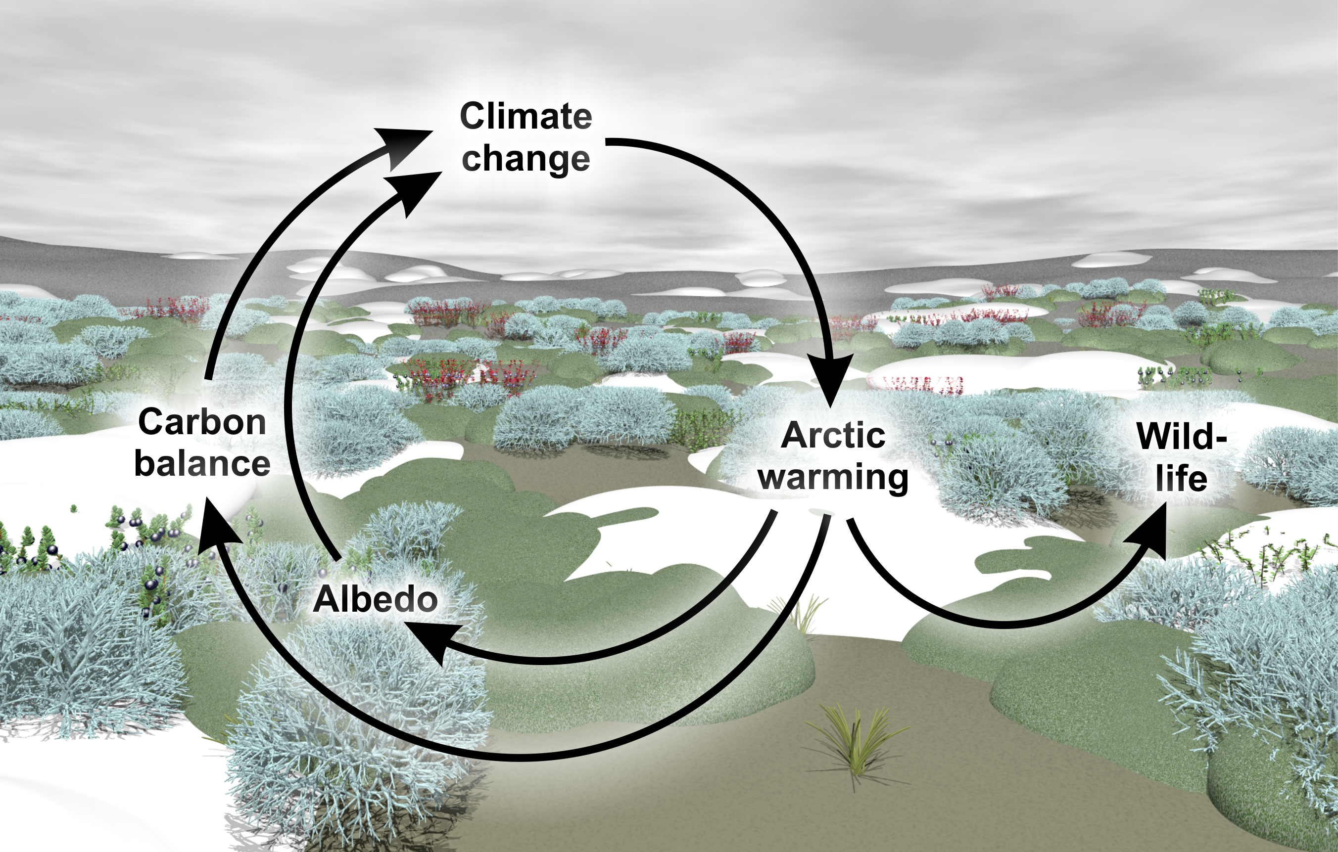 The tundra biome - a hotspot of climate change