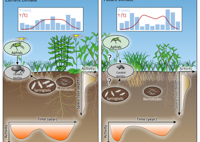 Soil biology under climate change