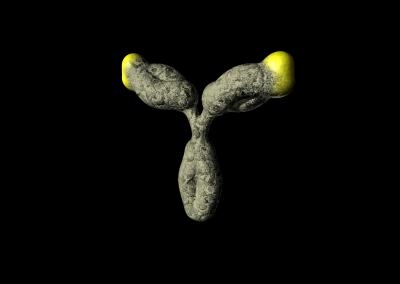 IgG-Antikörper