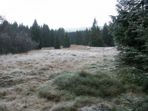 Wiesen im Harz (Schierke)