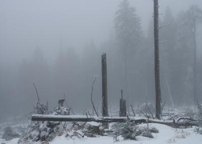 Winter am Brocken