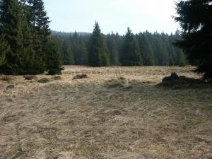 Wiese im Harz (Schierke)