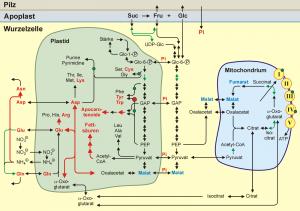 Abbildung zu Plant Physiol (139, 329-340)