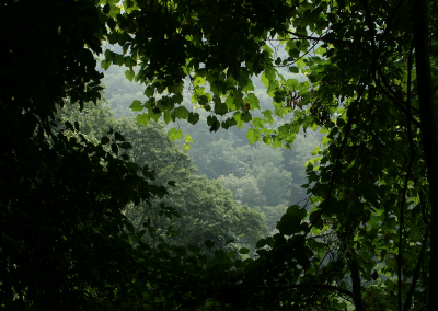 """Urwald"" in den Smoky Mountains (Tennesse, USA)"