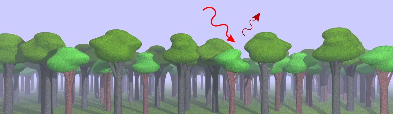 Wald und Chlorophyllfluorszenz