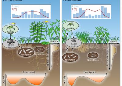 Der Einfluss des Klimawandels auf die Bodenbiologie