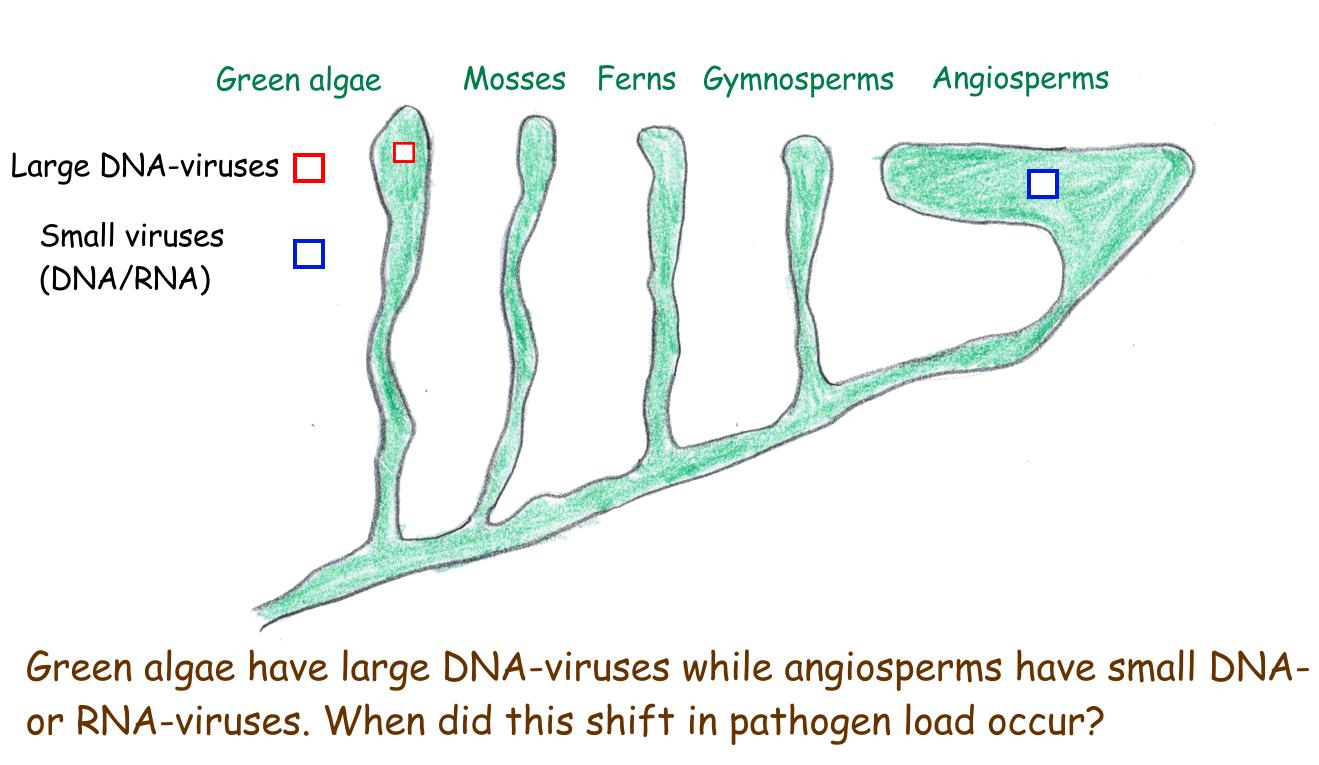 Higher Plants have Better Viruses #1