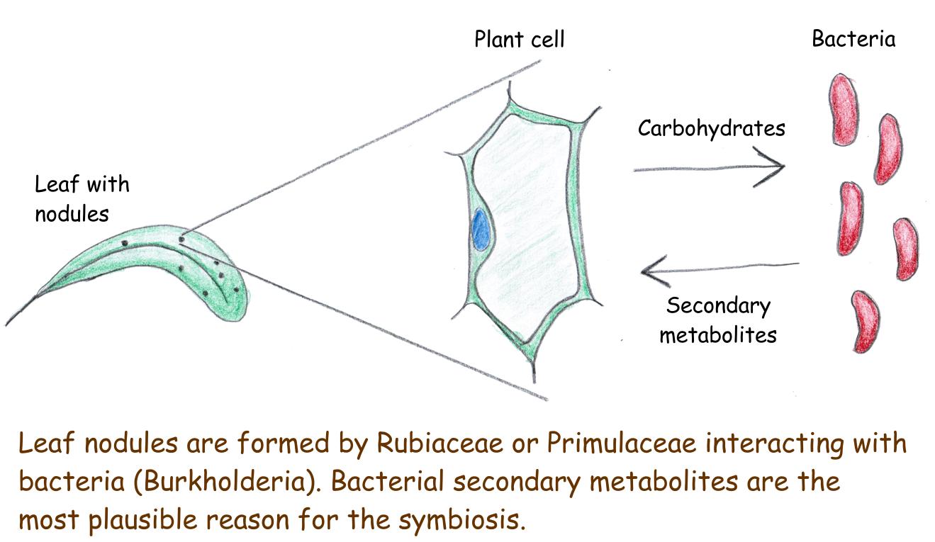 Genomes of leaf nodule symbionts - Scivit News #1