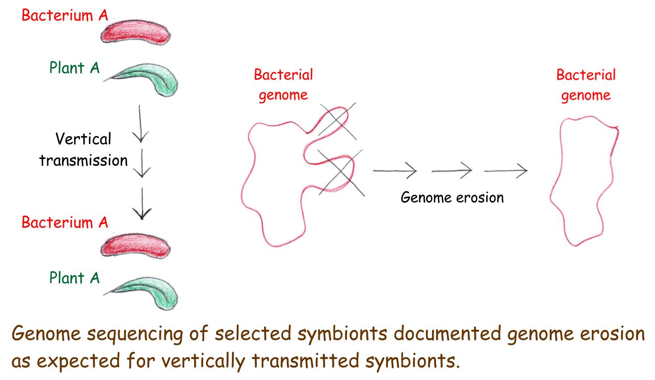 Genomes of leaf nodule symbionts - Scivit News #2