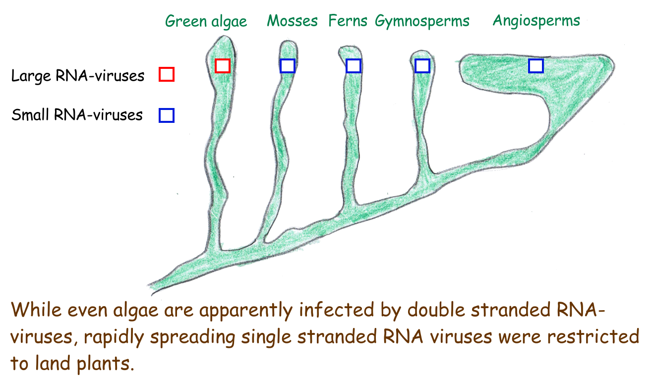 Higher Plants have Better Viruses #3