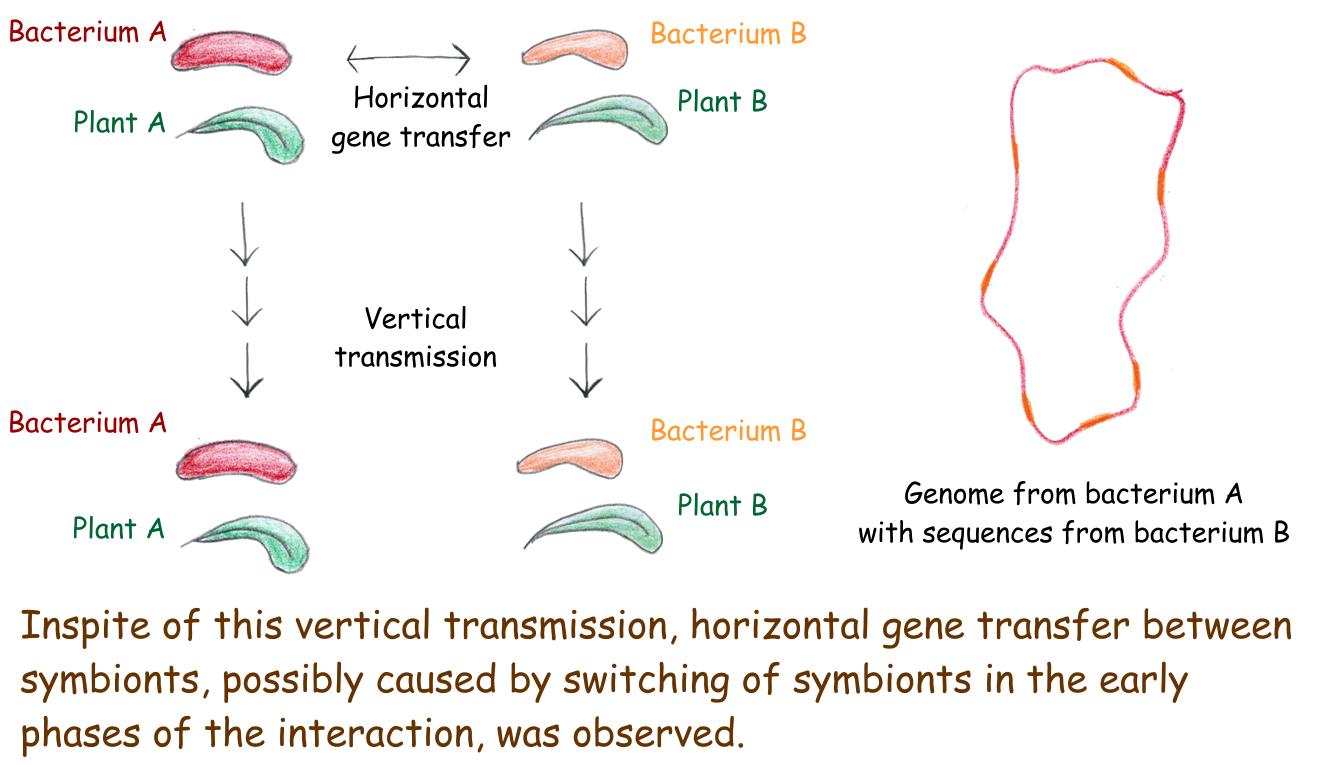 Genomes of leaf nodule symbionts - Scivit News #3