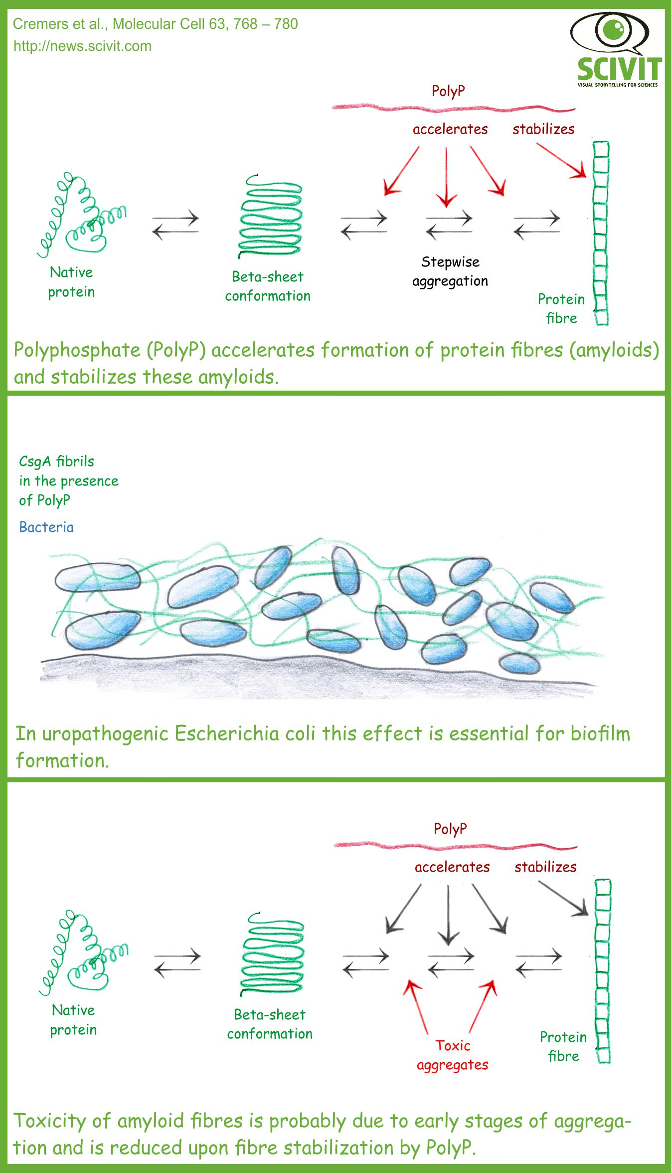 Polyphosphate initiates and stabilizes the formation of protein aggregates