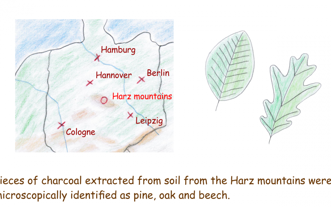 Trees in Central Europe during the last ice age