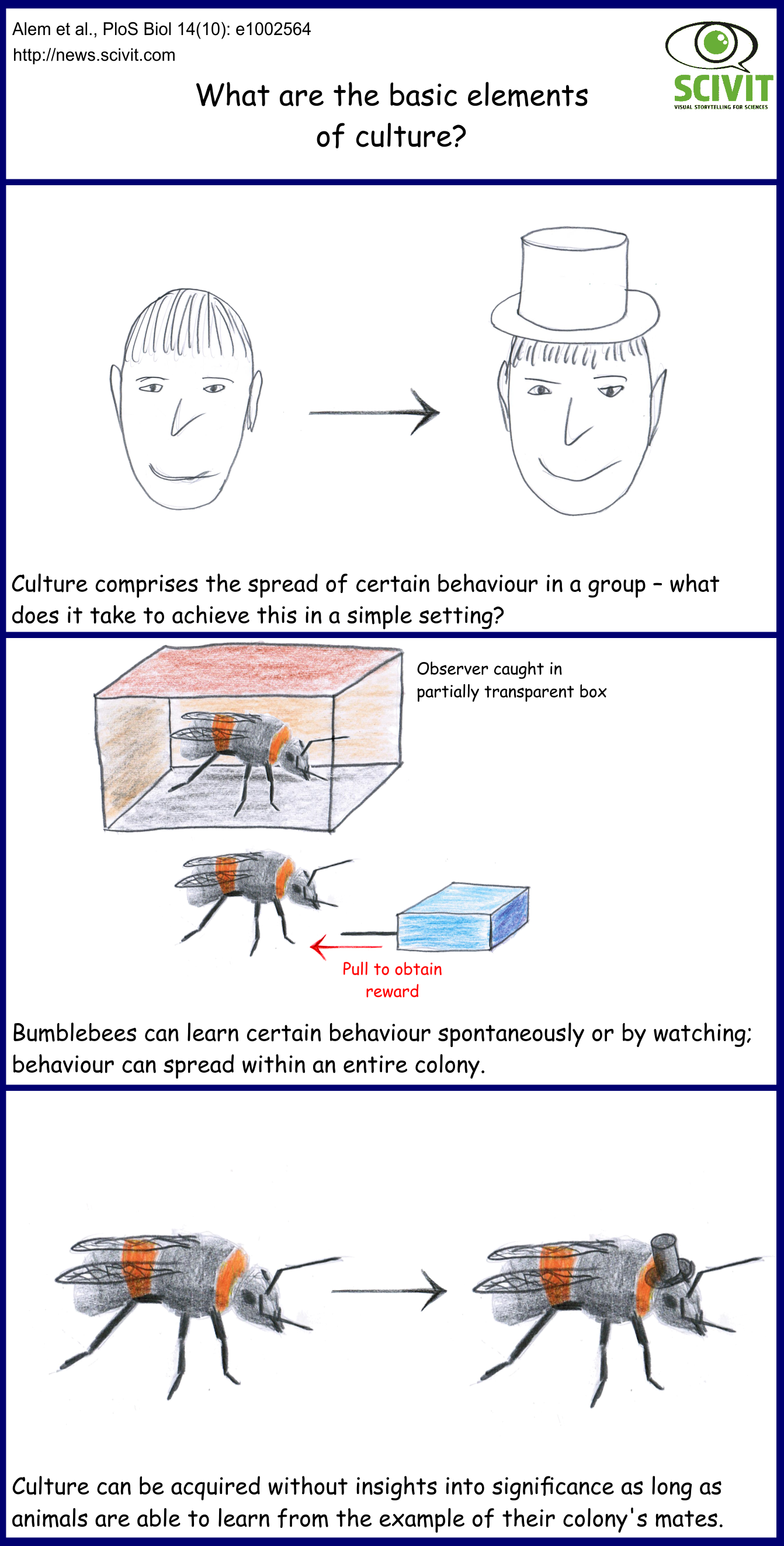 What are the basic elements of culture?