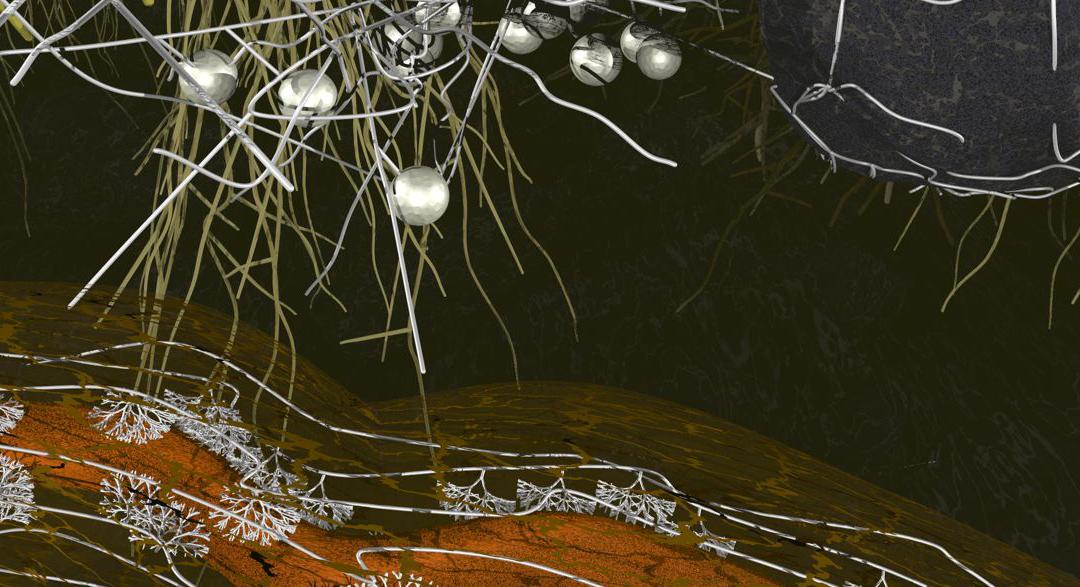 Arbuscular mycorrhiza – ancient belowground connections