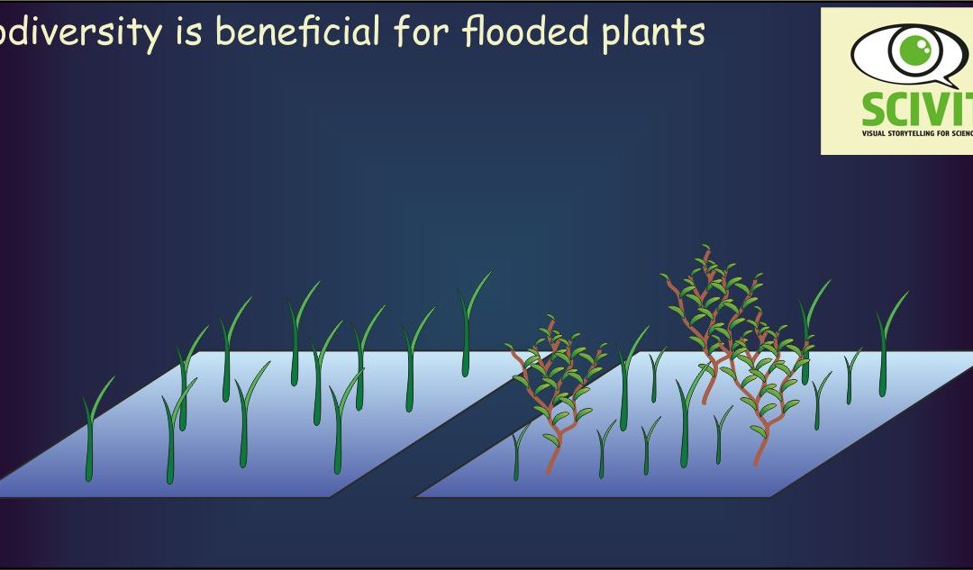 Biodiversity is beneficial for flooded plants