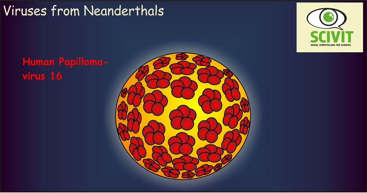 Viruses from Neanderthals