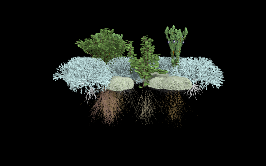 Virtual ecosystems: tundra plants