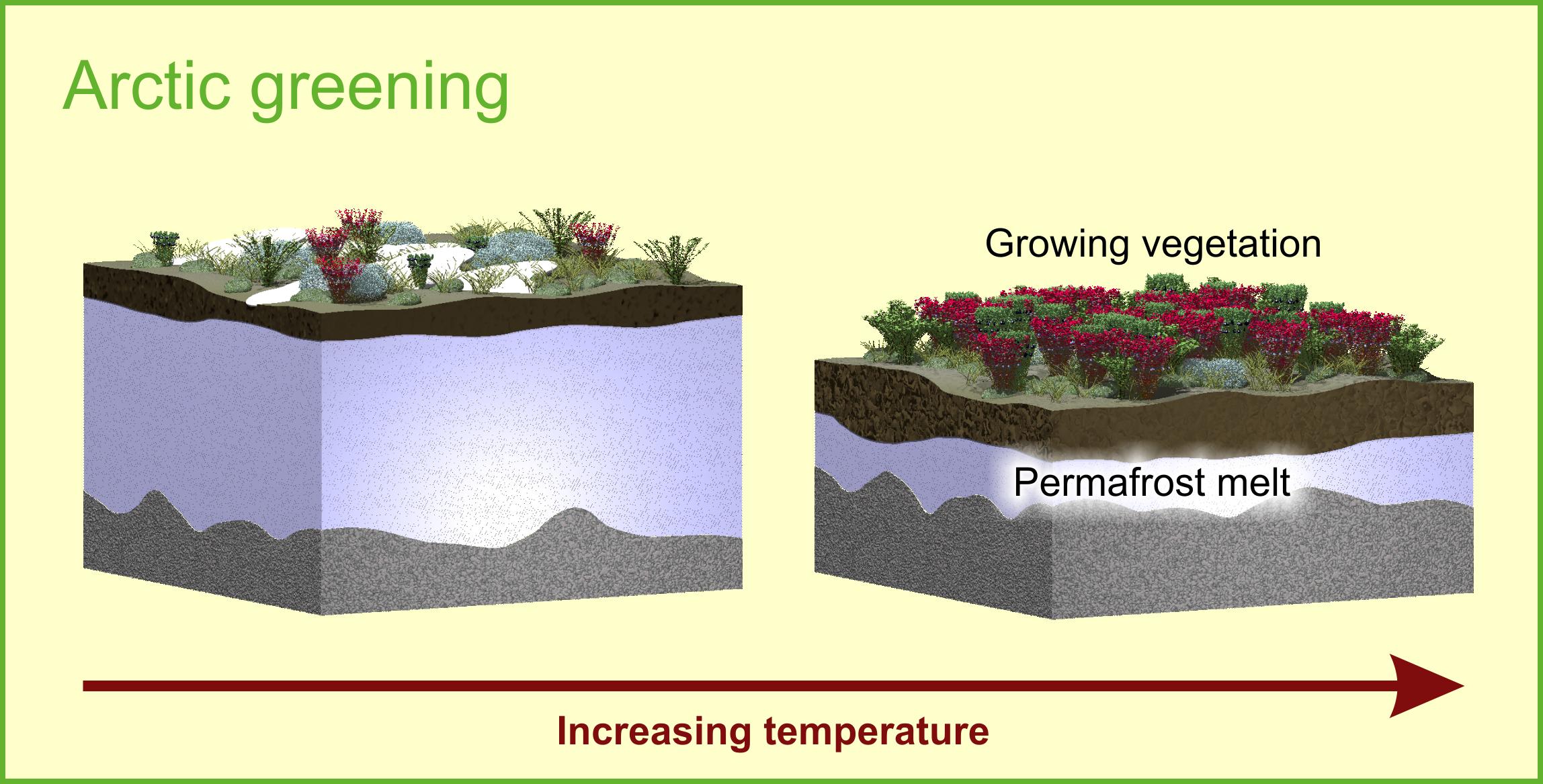 Arctic greening