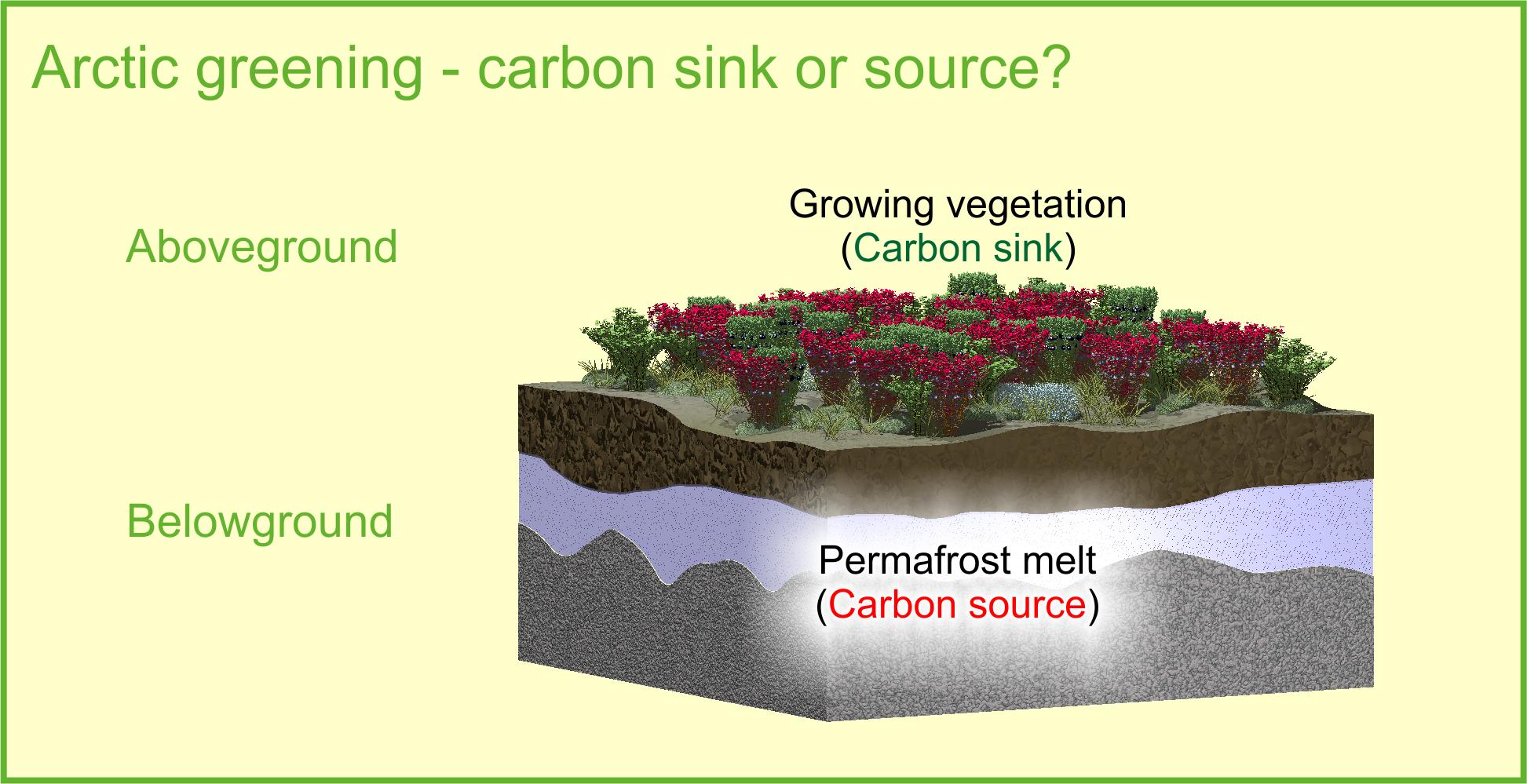 Arctic carbon balance
