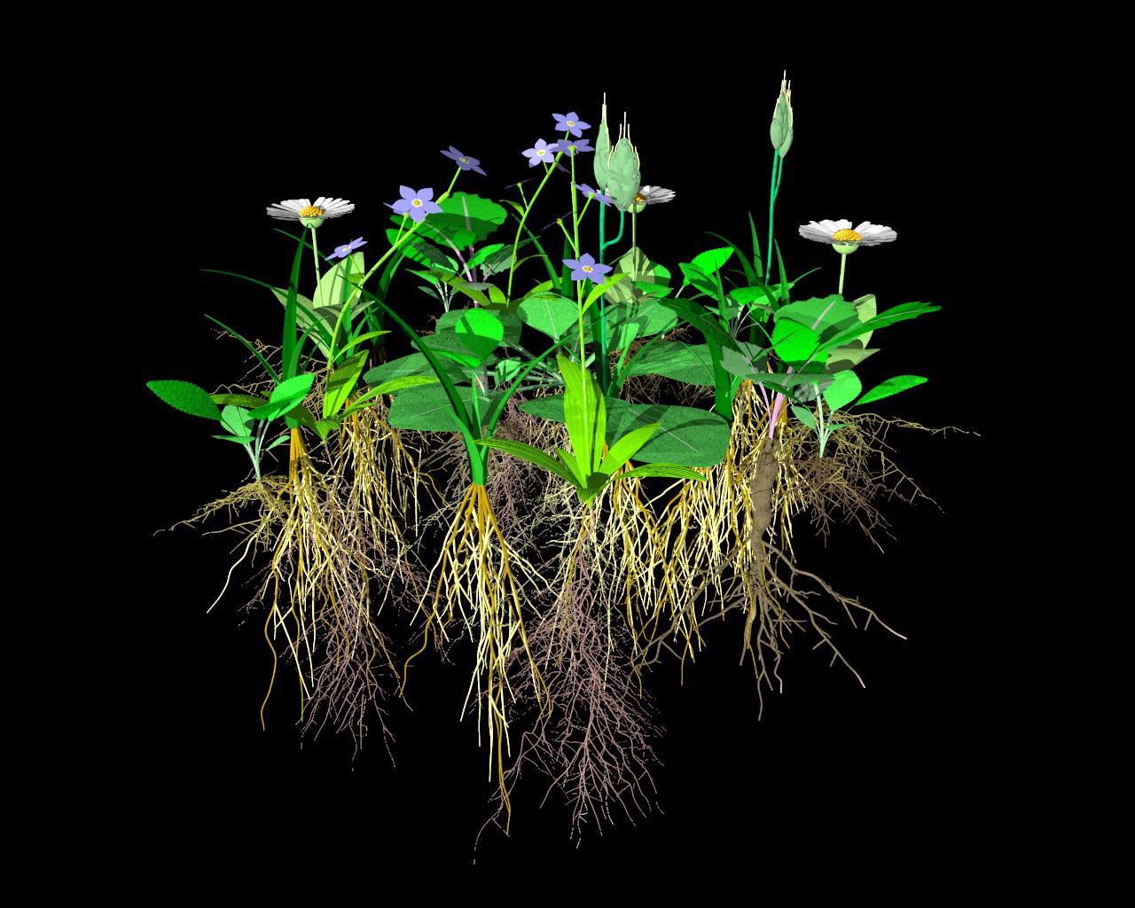 Pflanzengemeinschaft Wiese