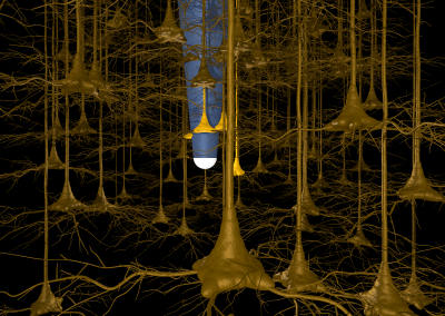Neuronal implant