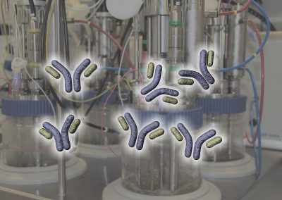 Schematische IgG-Antikörper vor Fermentationseinheit