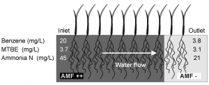 Abbildung zu MicrobialBiotech (6, 80-84)