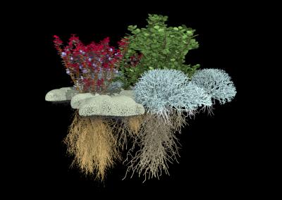 Arktische Pflanzengemeinschaft