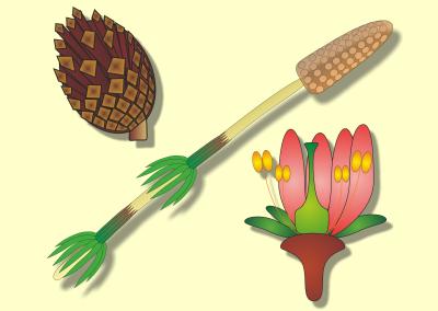 Pflanzengruppen