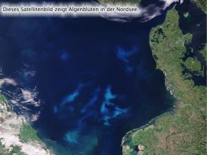 Algenblüte in der Ostsee